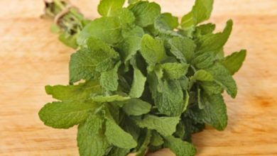 Damage to mint herb
